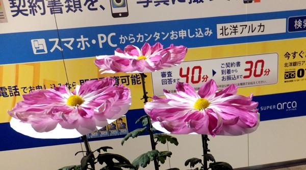 DSCF7141.jpg